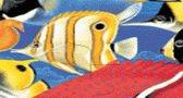 العاب فلاش صور بزل الأسماك Puzzle fishes Game